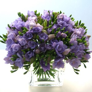 freesia-michael-george_2